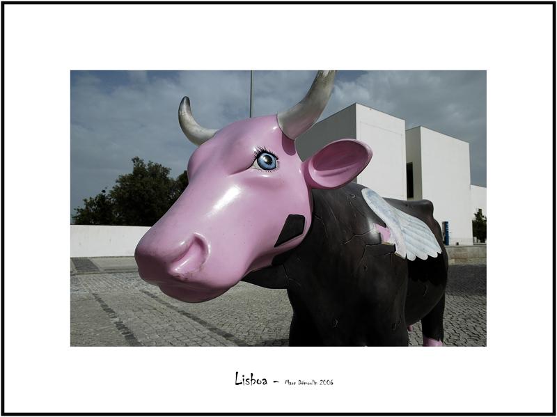 Cows in Lisboa 23