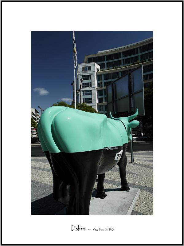 Cows in Lisboa 24