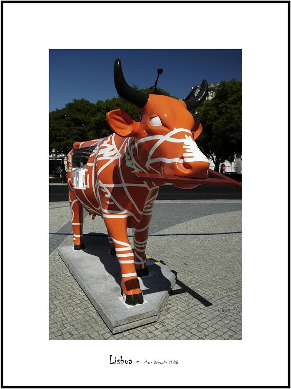 Cows in Lisboa 25
