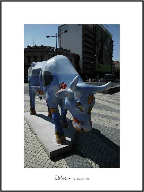 Cows in Lisboa 26