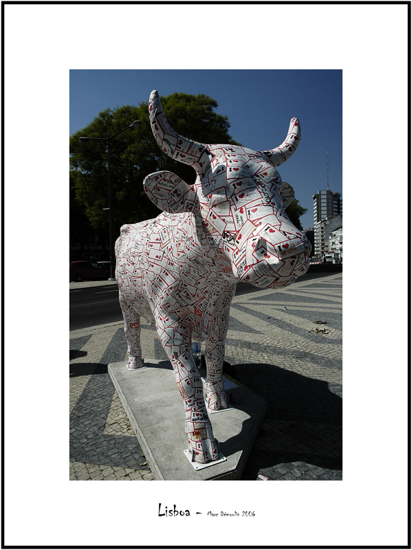 Cows in Lisboa 27