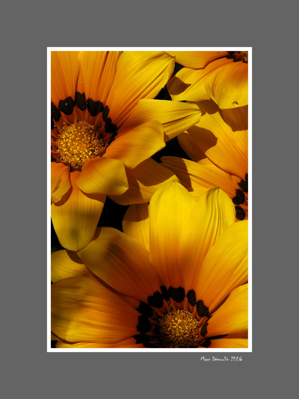 Floral 41