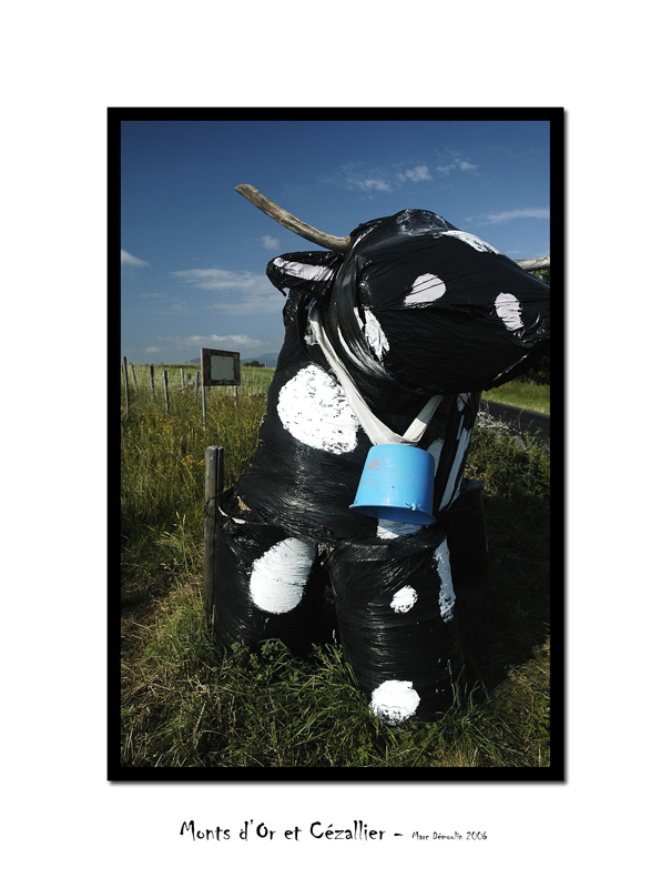Cow parade, country style