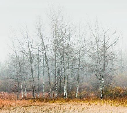 Trees In Fog 20091023