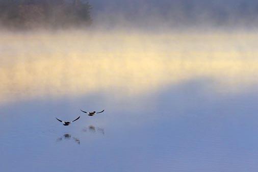 Birds Over Otter Lake 01460
