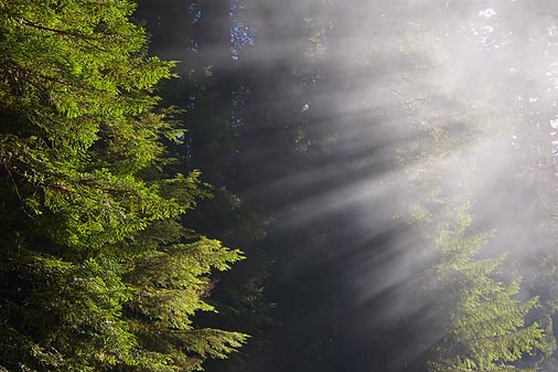 Redwood Sunrays4
