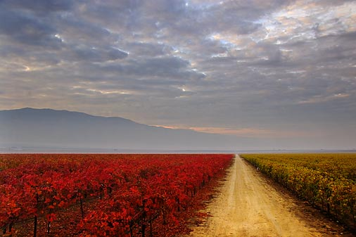 San Joaquin Valley Vineyards 20051208