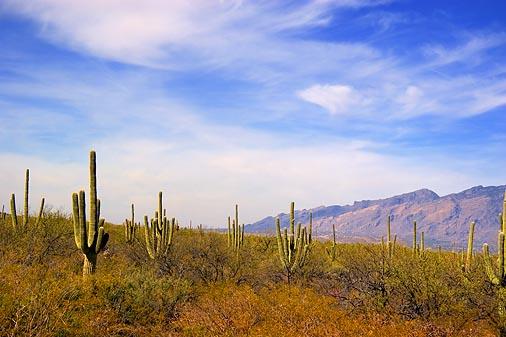 Saguaro National Park East 20060227