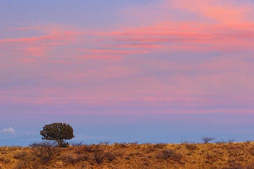 Lone Tree At Sunset 30802