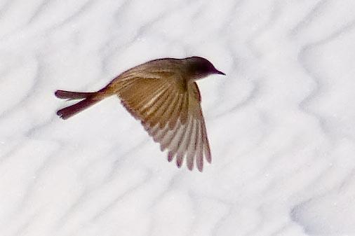 White Sands Bird 32297