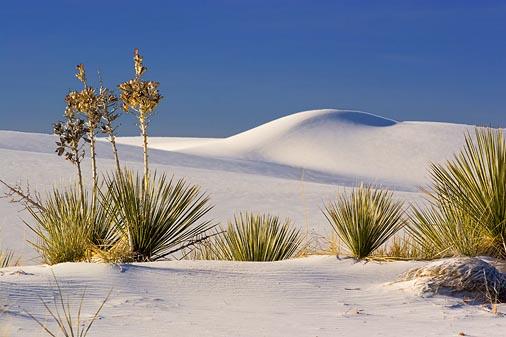 White Sands 32203