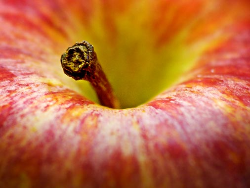 Apple Stem 20060717