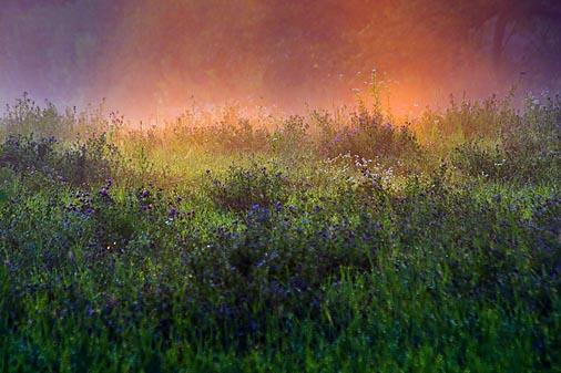 Fallow Field, Mist & Sunrays 20060801