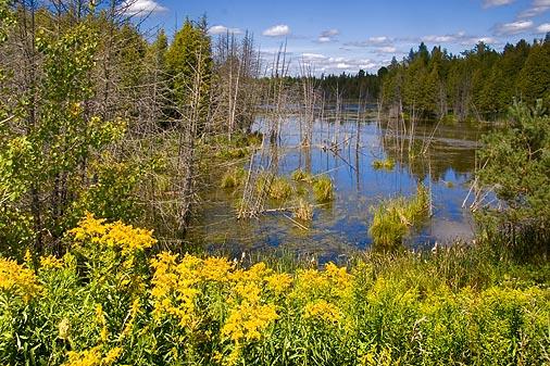 Stony Lake Marsh