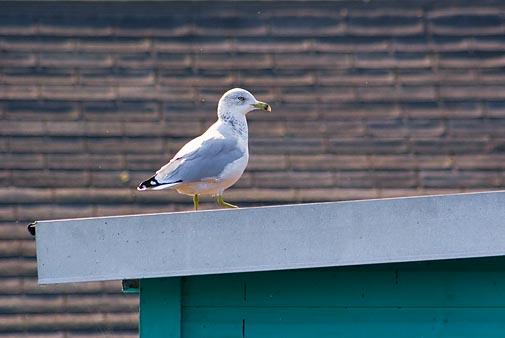Bird on a Boathouse