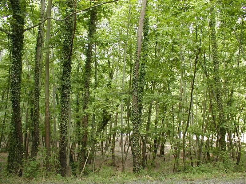 The color of Green near Amasra,                Bartin.