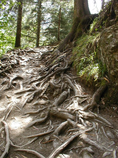 Roots and Leaves Themselves Alone ...  On the way to Sumela Monastery, Trabzon