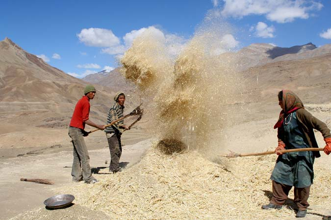Separating the grain from the chaff Spiti
