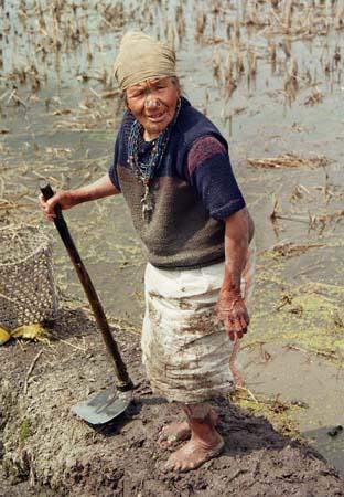 Apatani lady on paddyfield