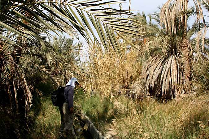 In the gardens of Siwa