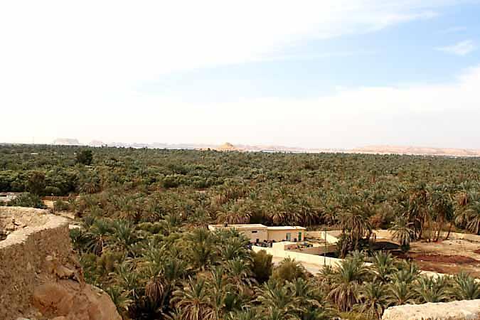 250000 date palms in Siwa