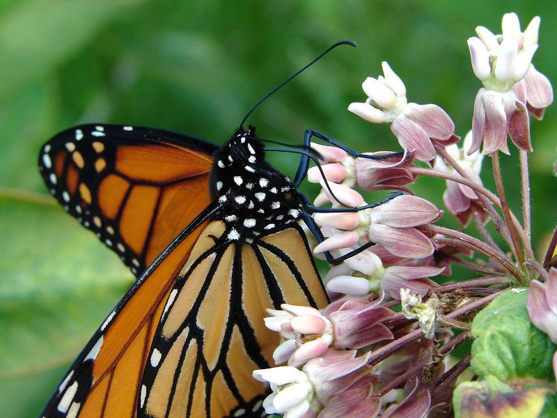 monarch ks-703 067.jpg