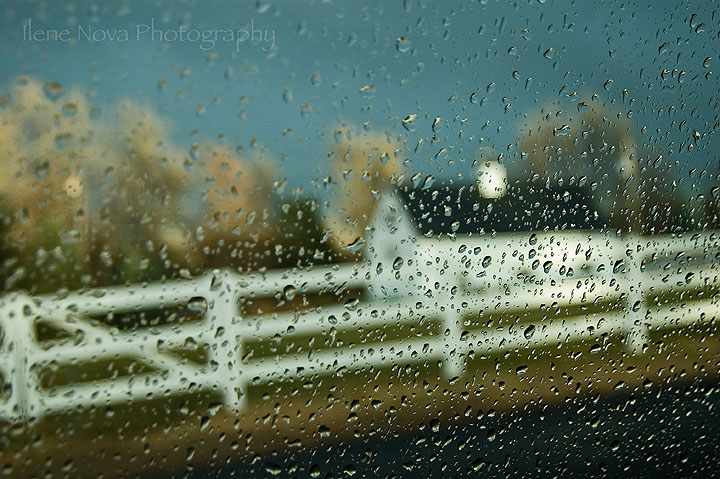 rainy day farm