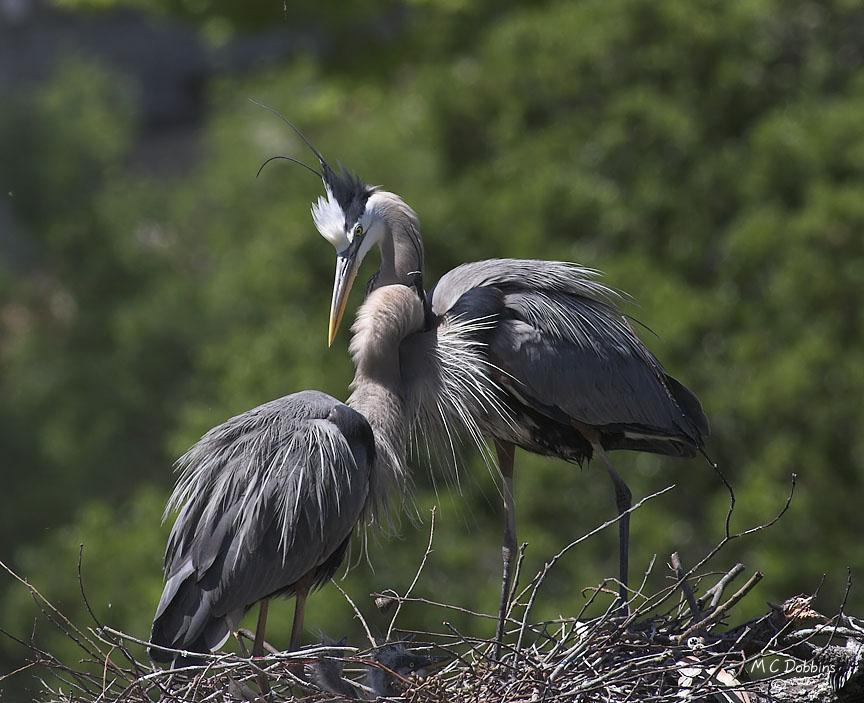 Female reaches through males neck