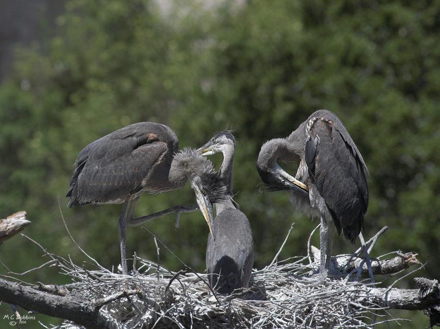 Chicks, Nest 2