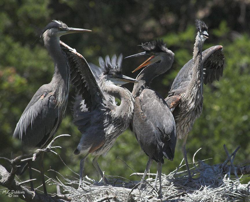 Feeding frenzy, Nest 2