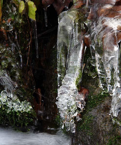 ice on moss again