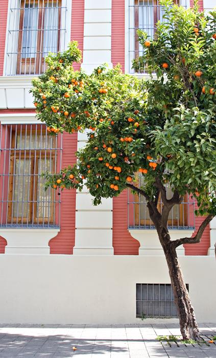 Oranges & Shutters