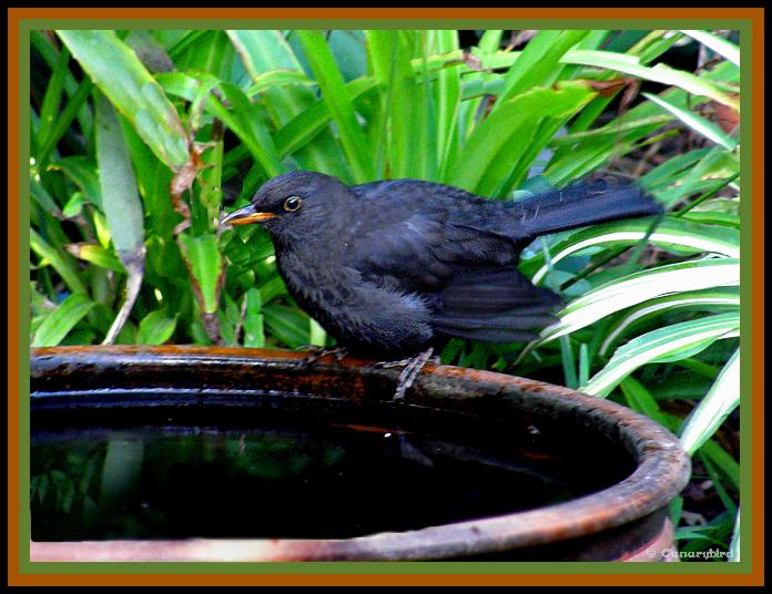 Blackbird Friday.jpg