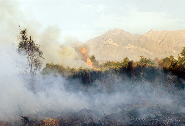 Brush Fire by the river