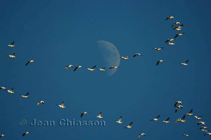 Flight In  Moon