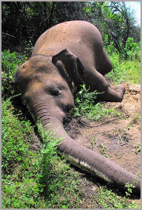 Human Elephant Conflict Sri lanka