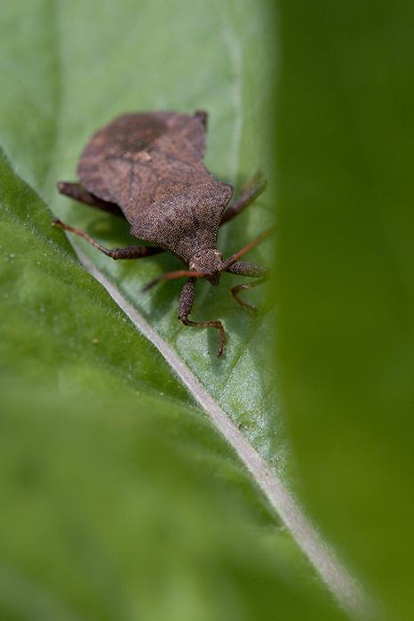 Bug on a leaf (obviously)