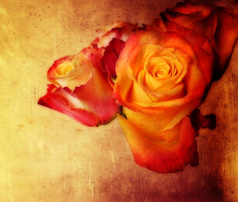 Hot rose...