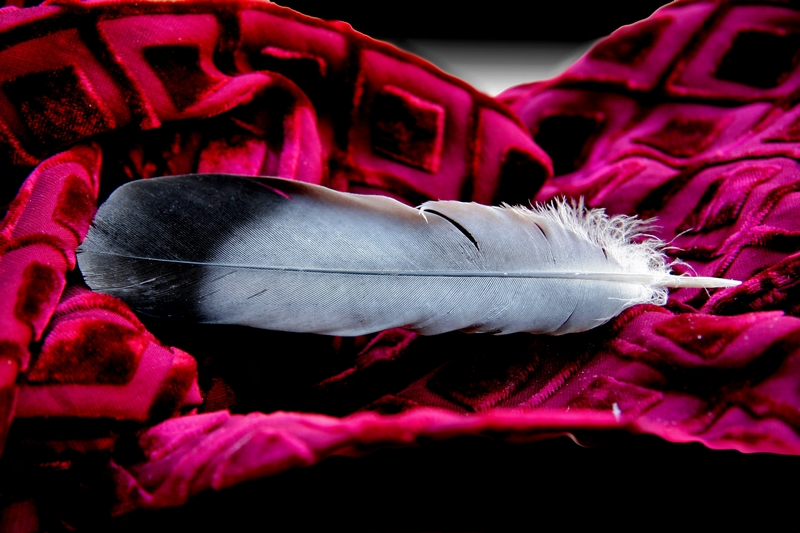 """""""I am a feather for each wind that blows"""""""