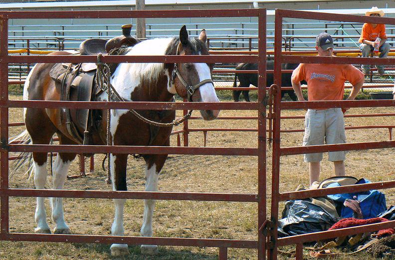 Sleepy Pinto Pony Saddled Up