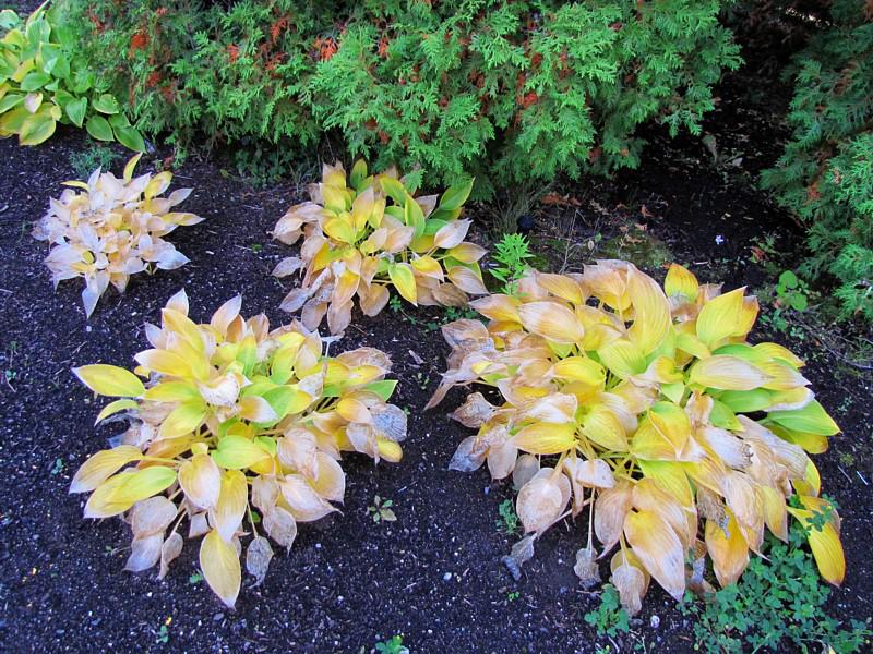 talles de feuilles jaunes