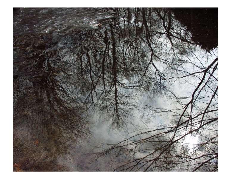 ir-200003080294_Reflections.jpg