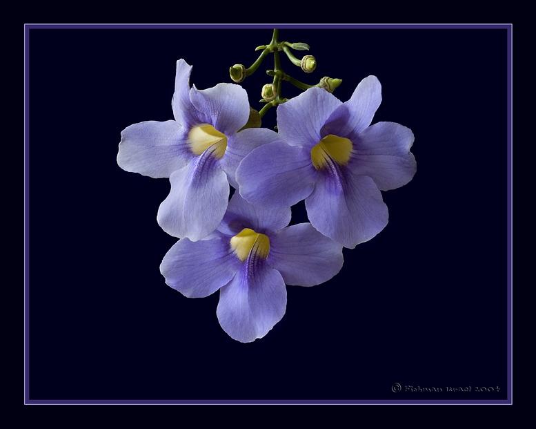 Nice flower.