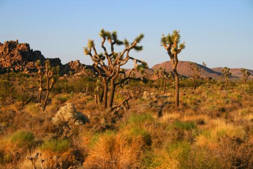 3587 Entering Joshua Tree.jpg