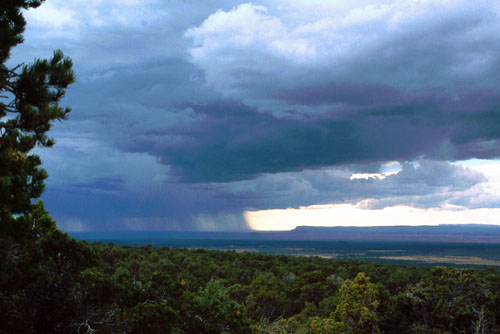 Storm over Kaibab Forest