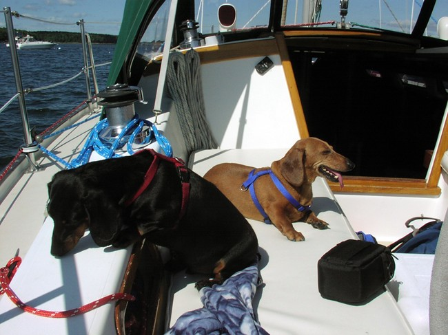 Dogs Boothbay