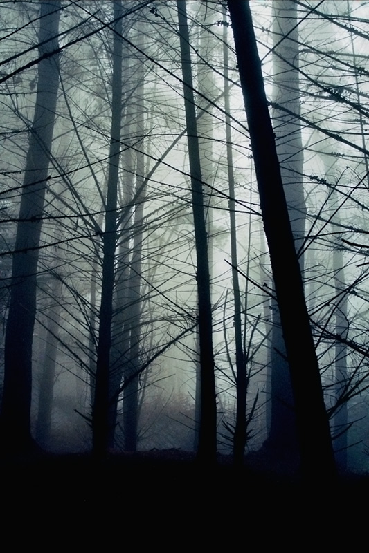 Caught in the Mist
