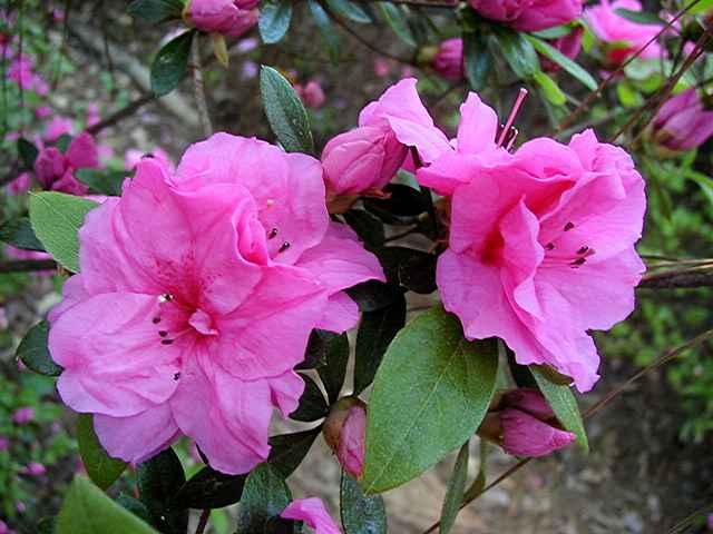 Garden State Garnet