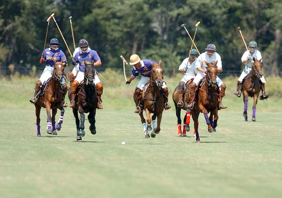 Herd of Polo Horses- 8 play a match