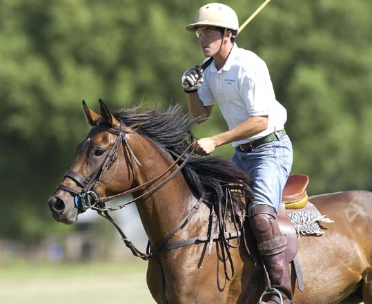 Green (in training) Polo Horse